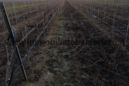 contrada antalbo,91026,Terreno agricolo,1234